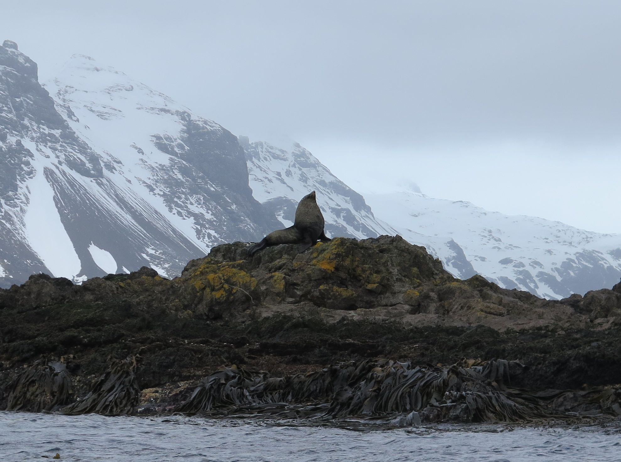 A male Southern elephant seal stood sentry along the narrowing channel we had to negotiate to reach Prion Island.