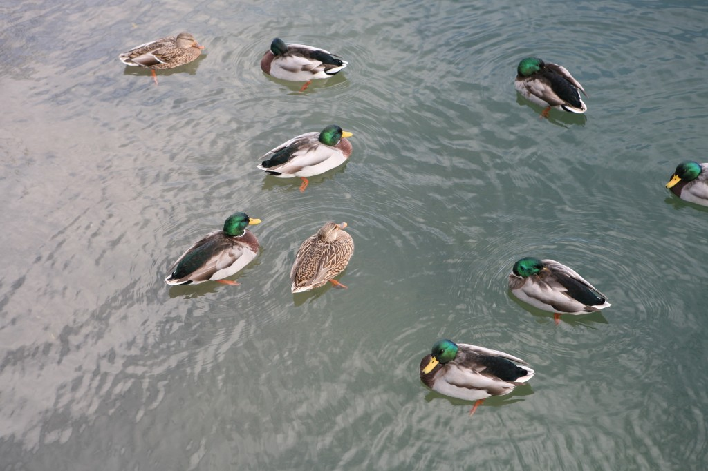 """Baseball fans might also refer to these as """"ducks on the pond."""" Though those are usually limited to three at a time."""