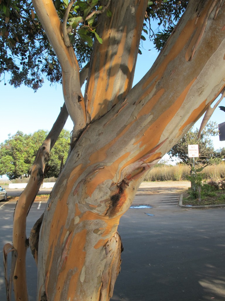 The bark on a neighboring tree was a work of art in itself.