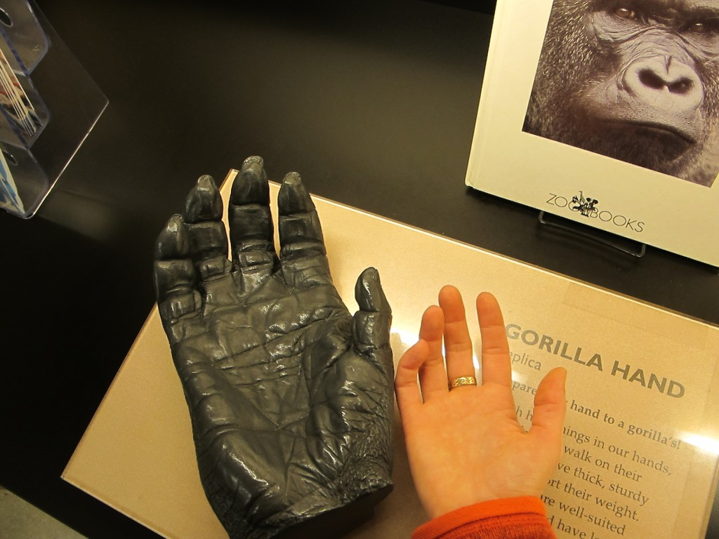 Pamelia sized up her hand against the cast of a gorilla's hand.