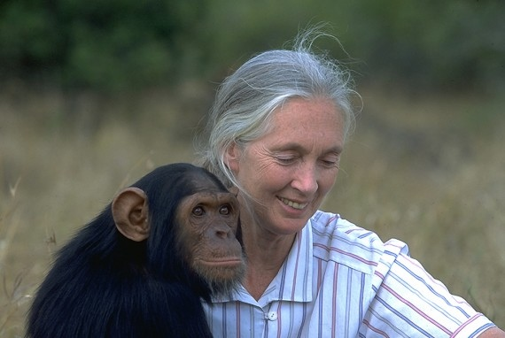 JANE GOODALL , primatologist, anthropologist, the world's foremost expert on chimpanzees and author of 26 books, including  40 Years at Gombe  and  Hope for Animals and Their World