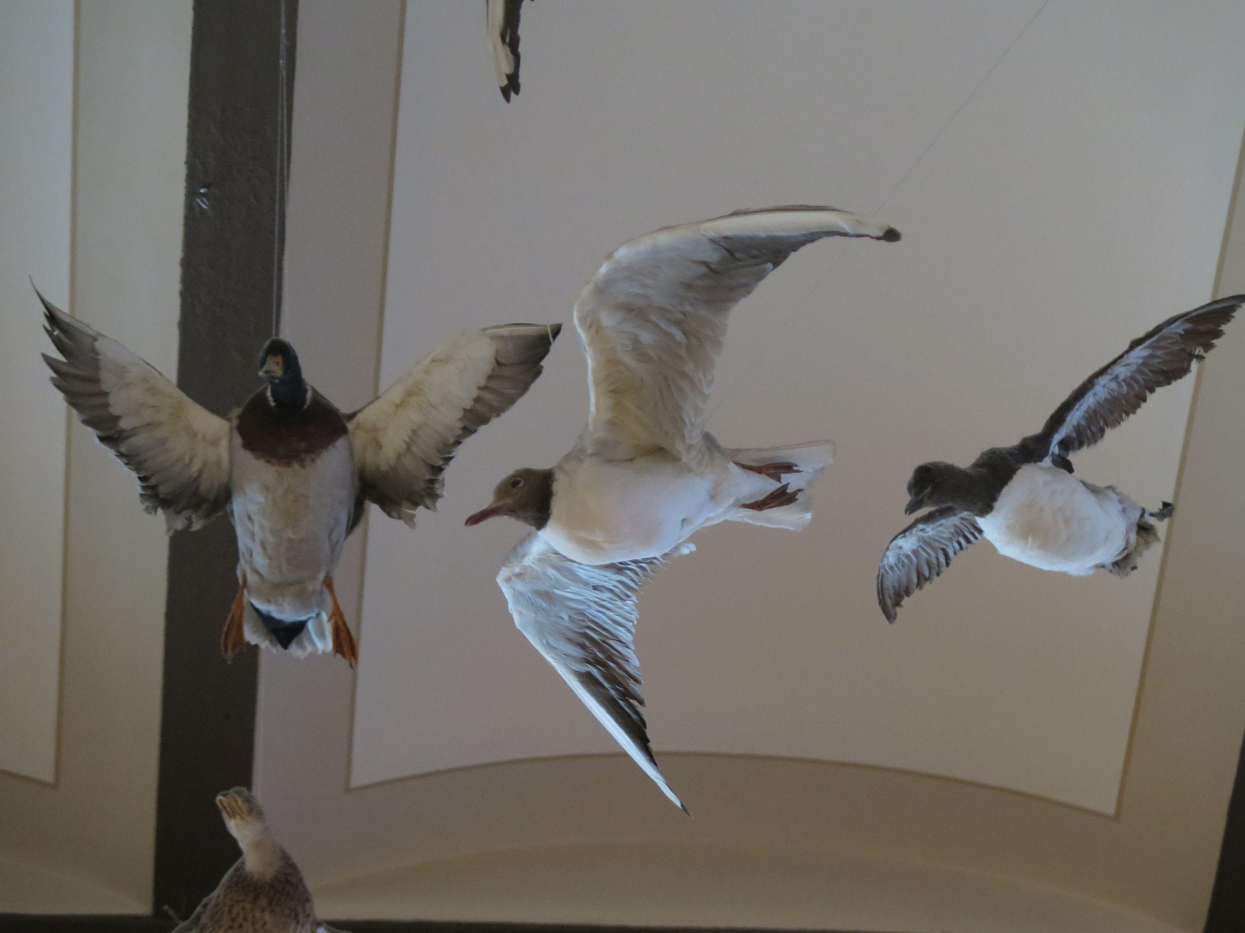 brmuseumbirds1.jpg