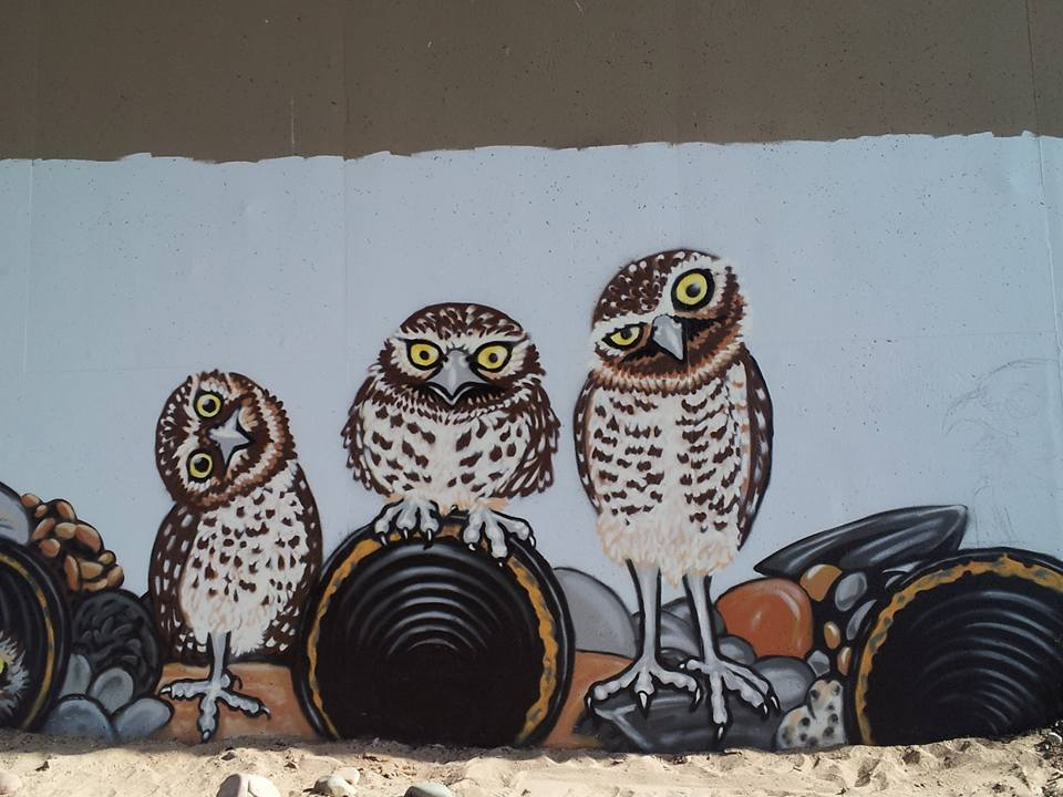 """Teresa notes that burrowing owls have a """"goofy charm"""" when parallaxing—that is, tilting and turning their heads to better see an object."""