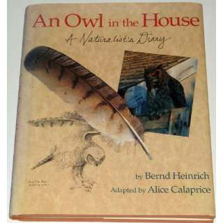 An Owl In the House