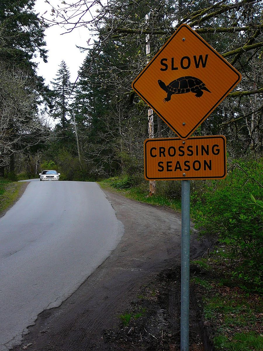 A turtle-crossing sign like the one Barb Duhlman Deibel mentioned. This one is in British Columbia and was photographed by Christian Engelstoft.