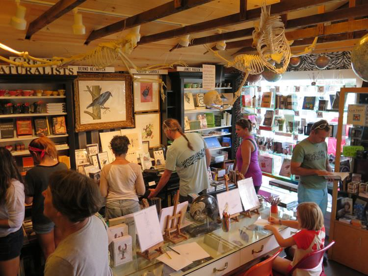 Visitors shop, learn, draw, examine bird and insect specimens, take part in interactive installations and immerse themselves in a space that has the feel of a 19th-century naturalist's lab/studio,