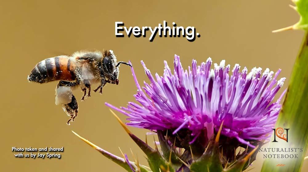 Everything1.jpg