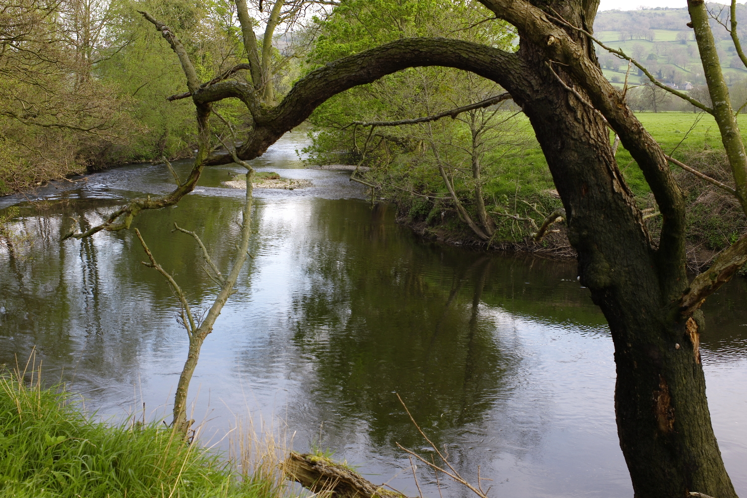 The River Derwent, 10 minutes from Darley House, offers endless painting prompts.