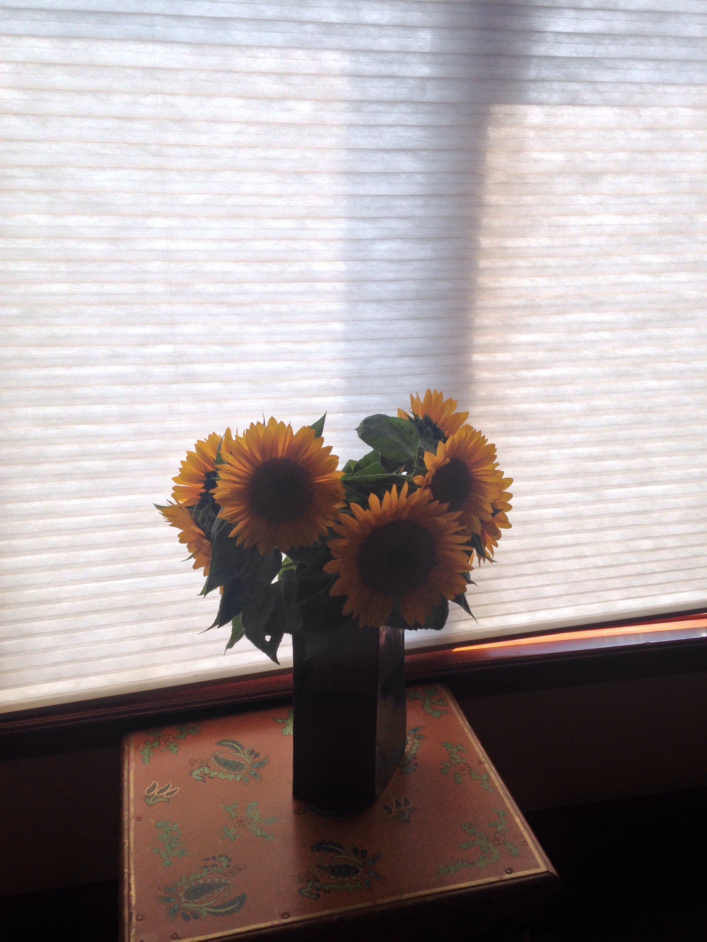 Sunflowers, housewarming gift of Sam and Mary Lou Haskins, San Francisco, September 7, 2017.