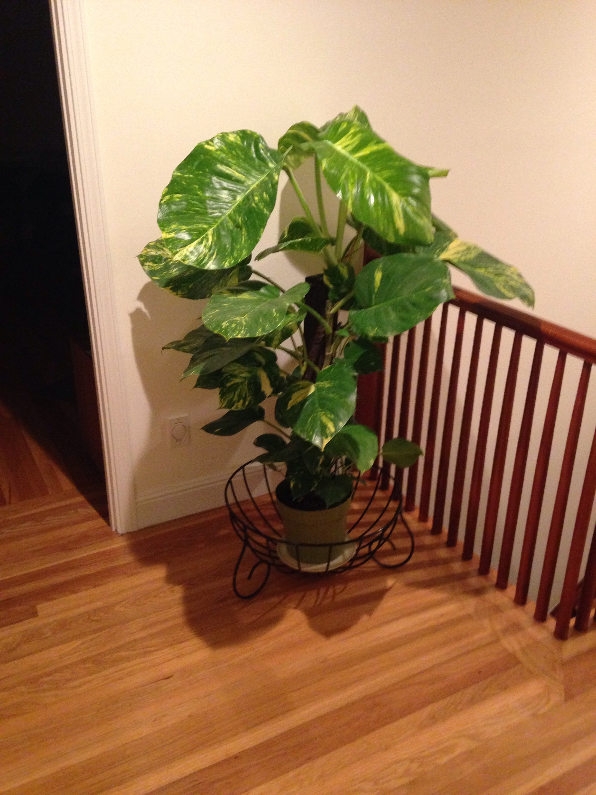Hallway in the author's home and the mysterious new houseplant there, discovered shortly after reading the Brazilian writer Clarice Lispector, San Francisco, September 14, 2017.