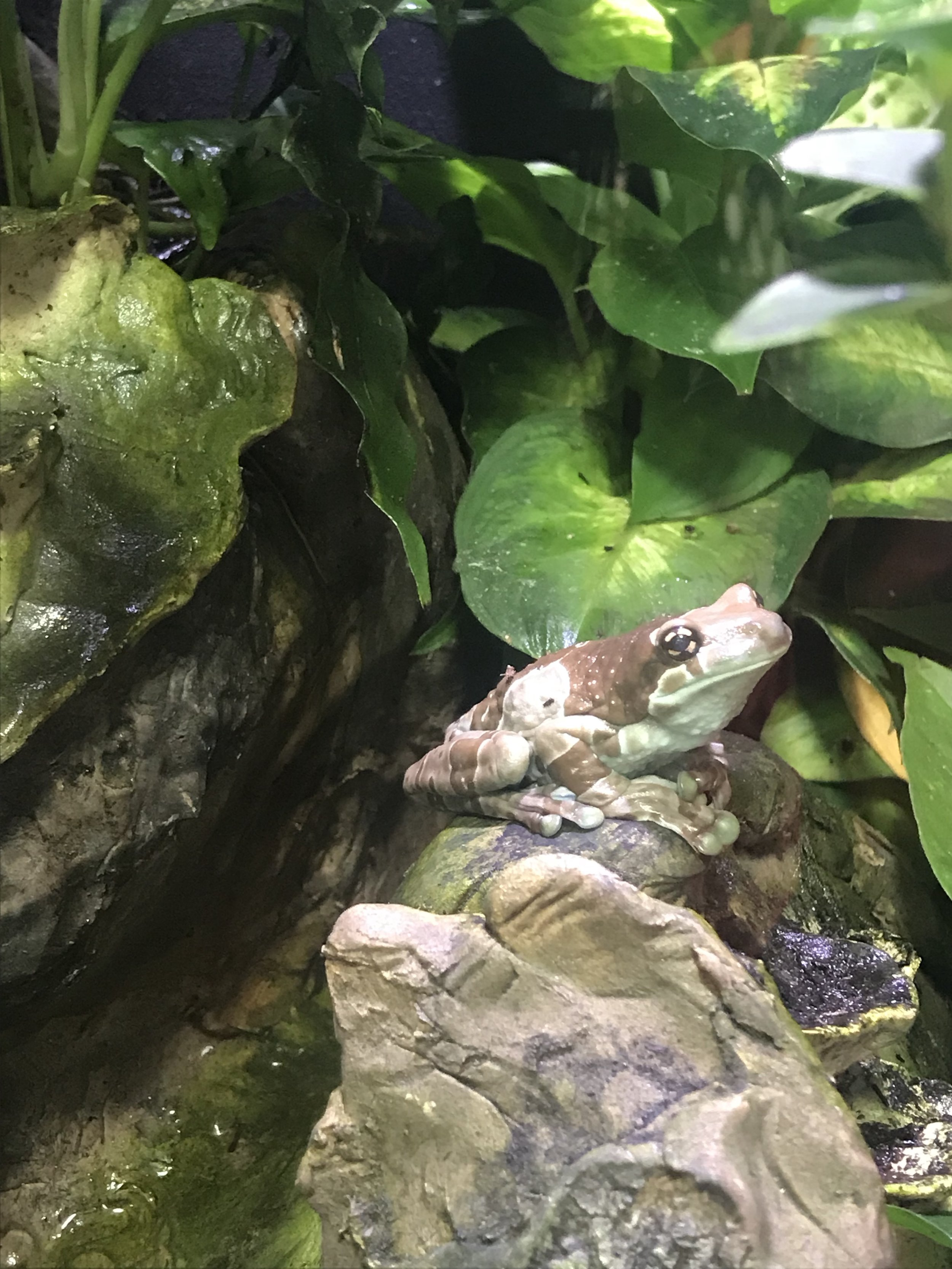 """Froggy (D-Utah), attempting both camouflage and persiflage in a museum of natural history somewhere in this virulently 'red' state, remains noncommittal about the Kavanaugh confirmation but is on record as saying, """"how could anyone be a Republican?"""""""