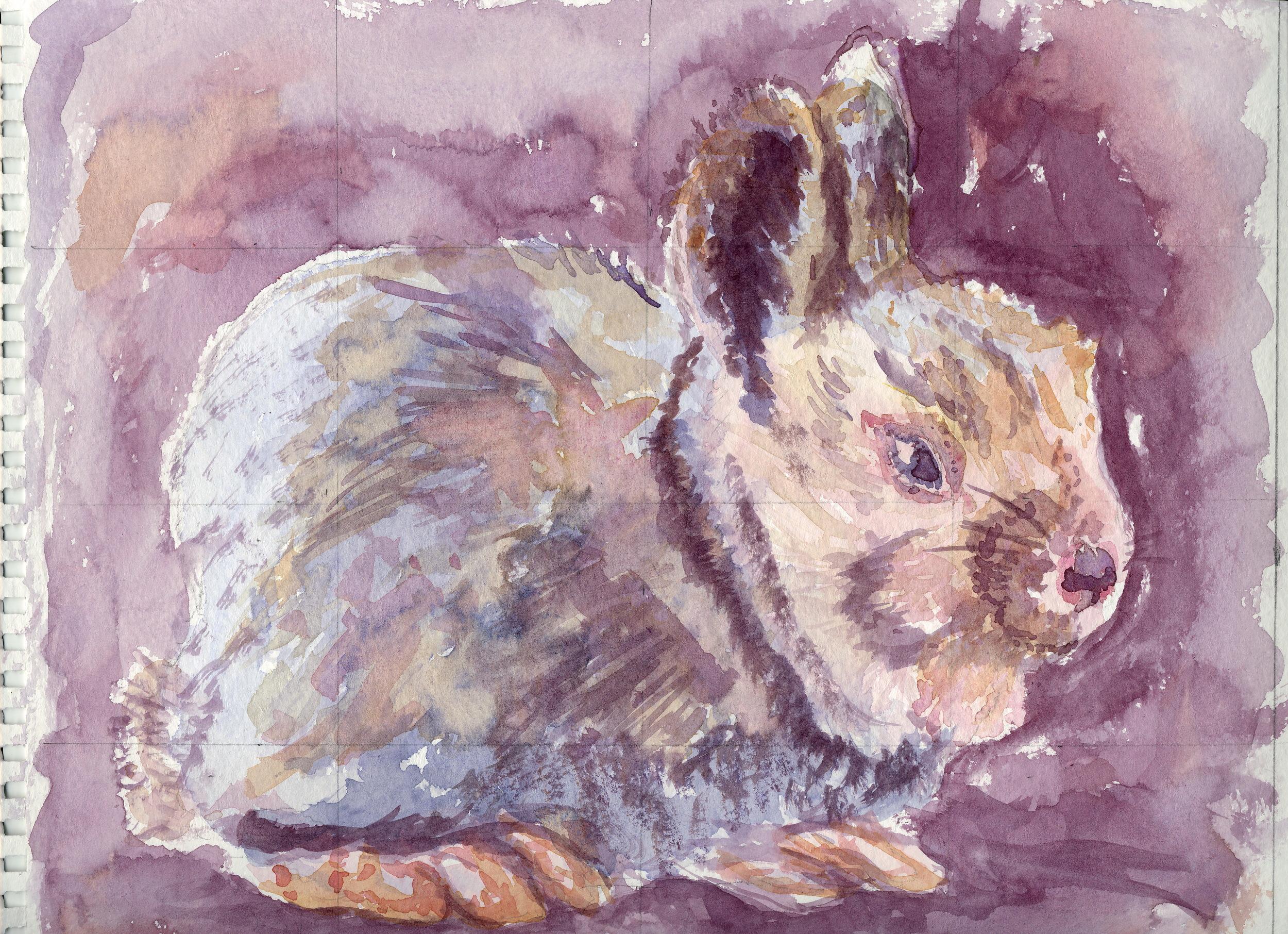 Violet Bunny