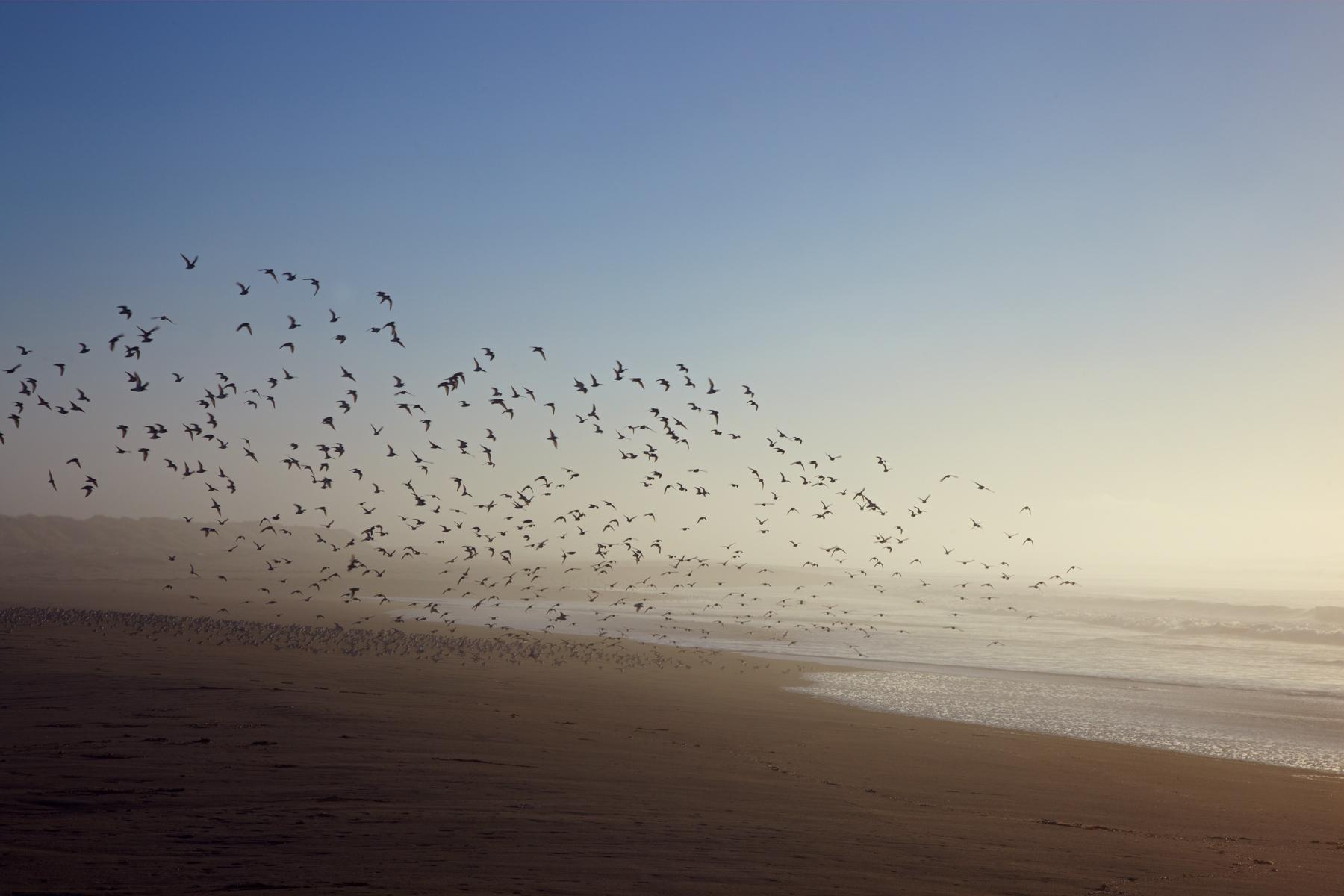 California_Humboldt_coast.jpg