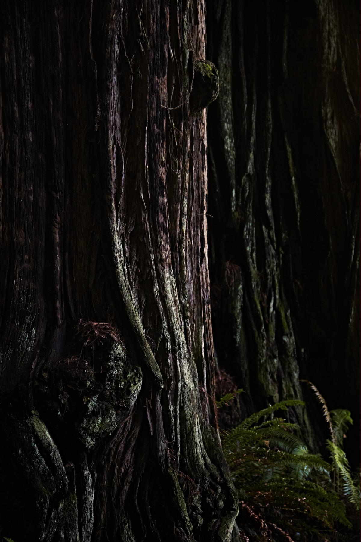 California_Humboldt_Redwood.jpg