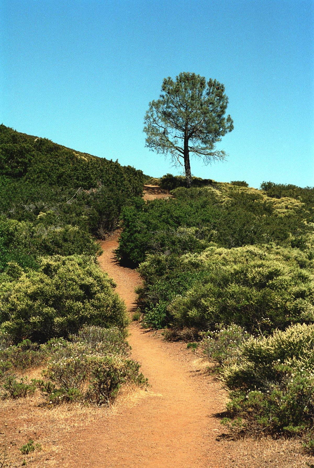 California_San_Francisco_Angel_Island_Tree.jpg