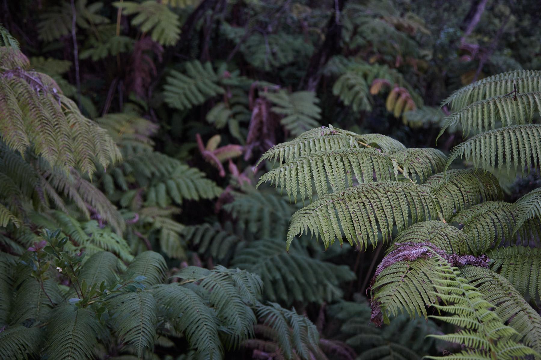 Hawaii_Big_Island_Jungle.jpg