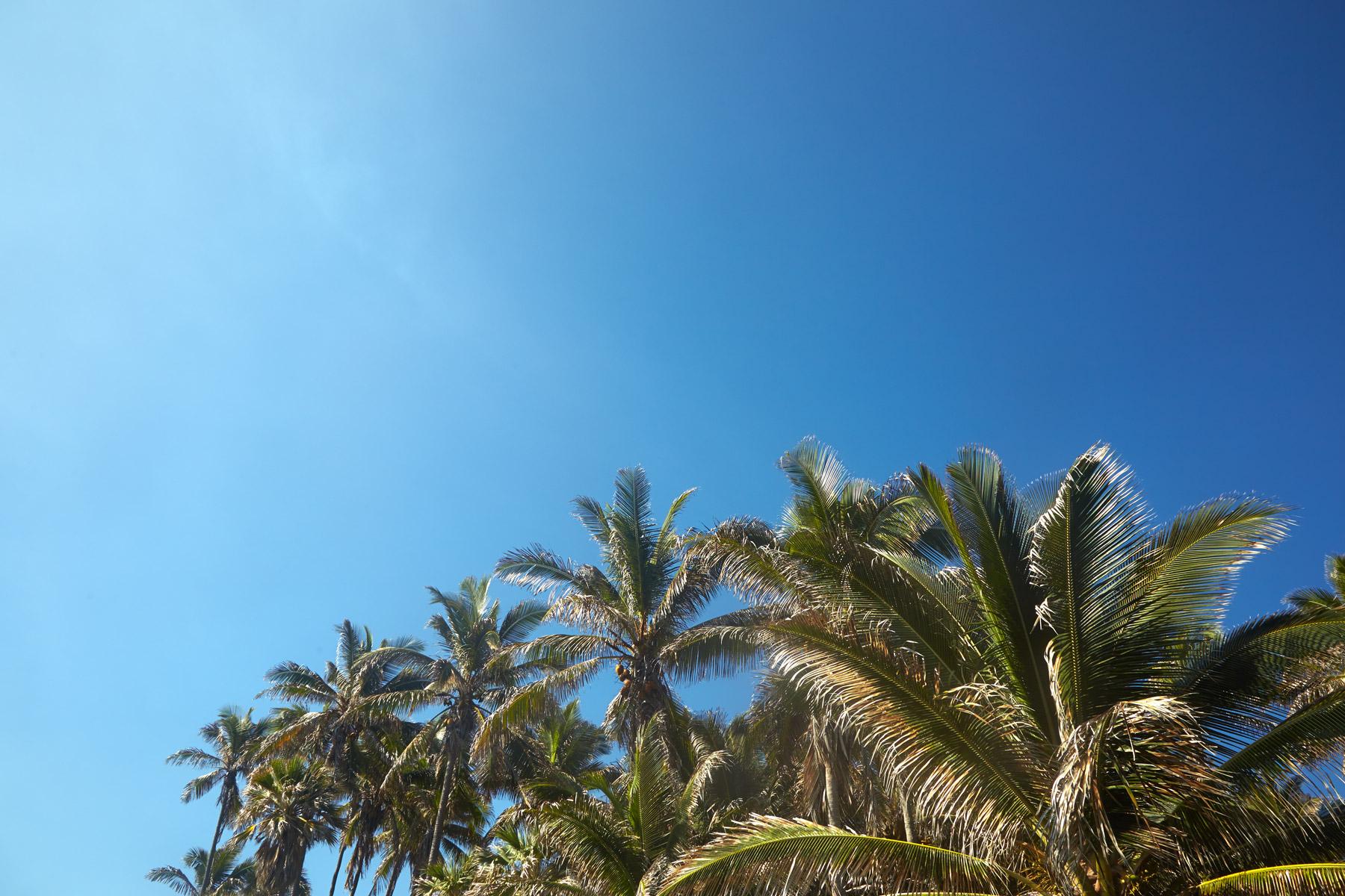 Hawaii_Big_Island_Palm_Trees.jpg