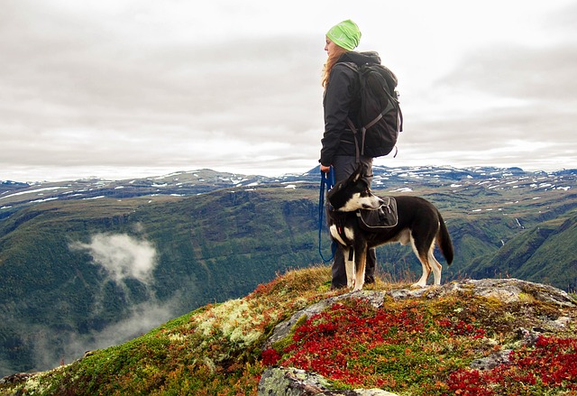 Hiking, trekking or walking with the dog in the mountains and in nature