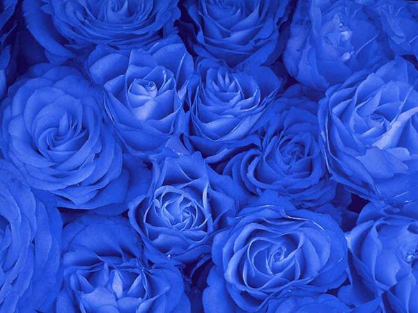 blue bouquet-wedding-flowers-edmonton-sherwood park-weddings-photographers