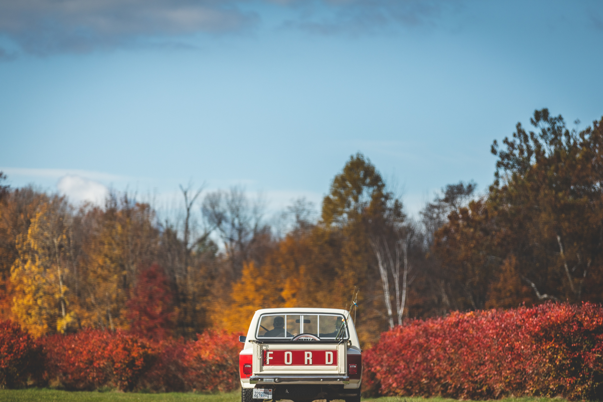 ford-truck-in-blueberry-fields.jpg