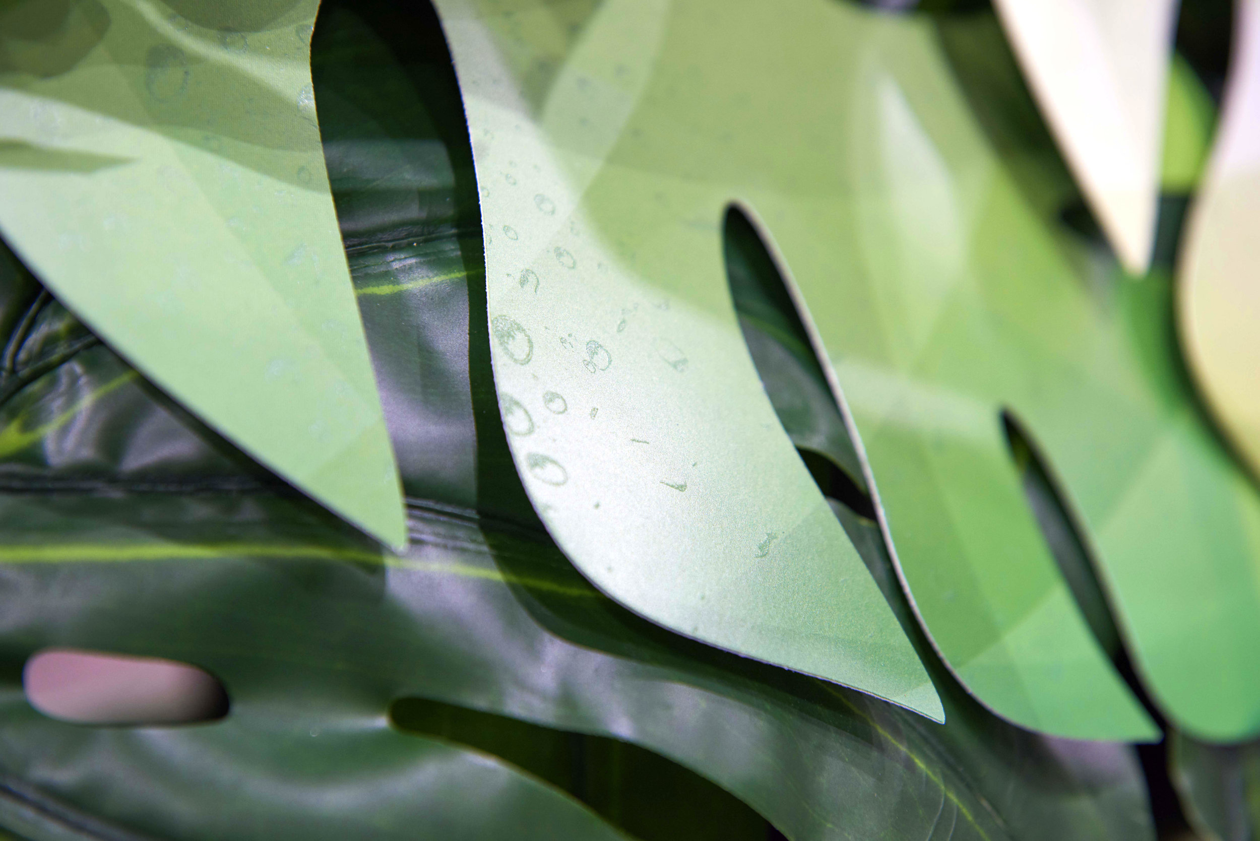 INKLAND_DETAIL_SHOT_LEAVES.jpg