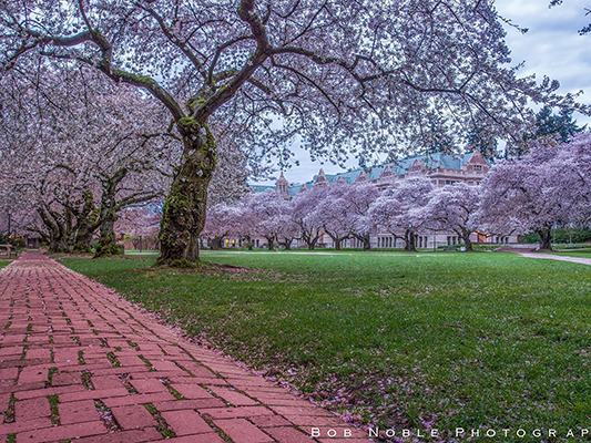 جامعة واشنطن