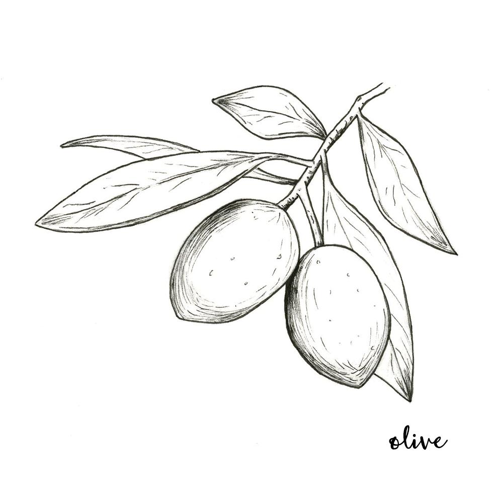 olive oil.png