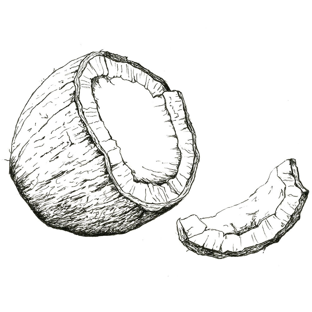 Coconut - Coconut Oil is a natural emollient. It contains chain fatty acids that assist in keeping skin smooth to the touch by helping to retain moisture. Its benefits can be attributed to the presence of lauric acid, capric acid and caprylic acid, known to have antimicrobial, antioxidant,antifungal, and antibacterial properties.
