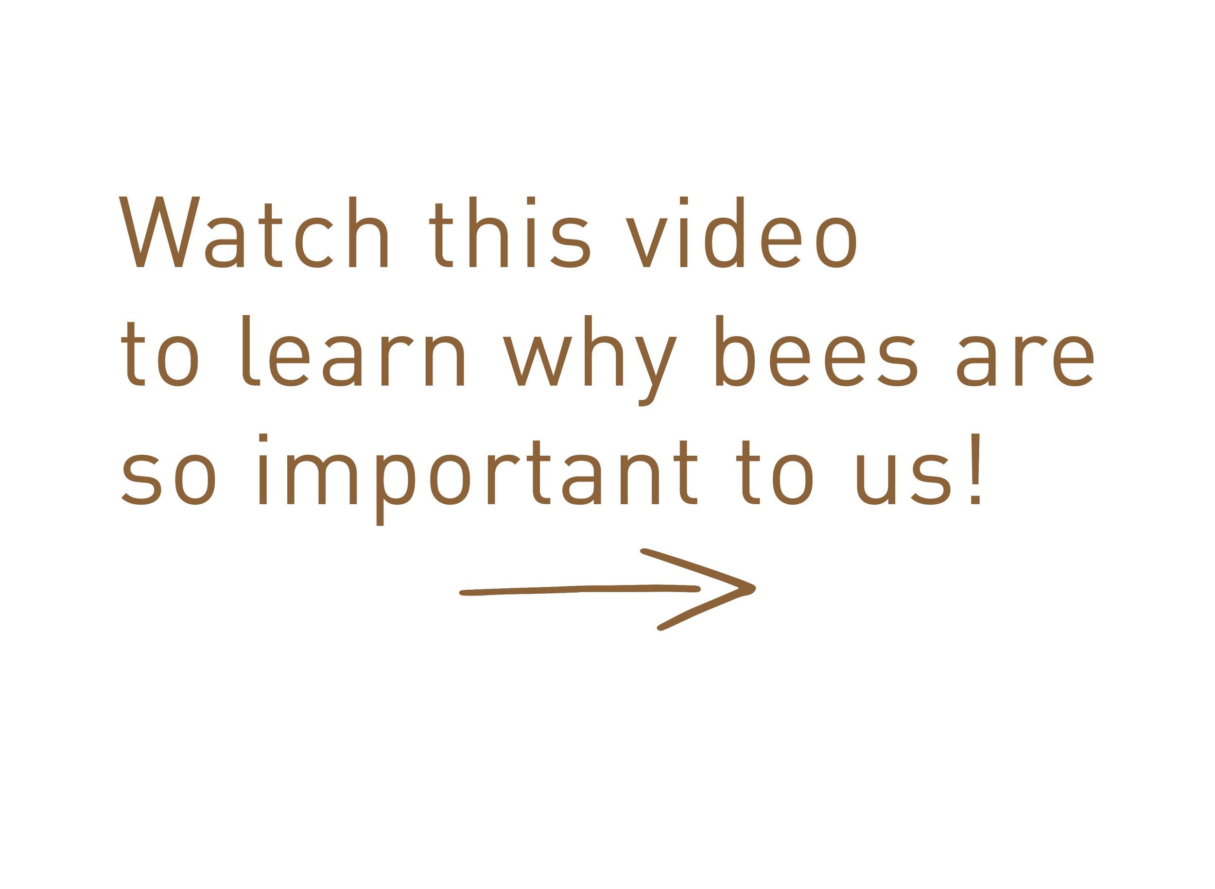 Why bees are important.jpg