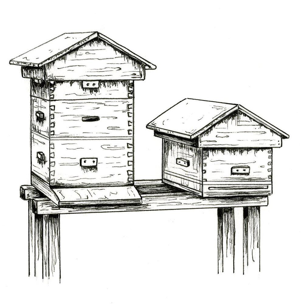 Beehives_Squares .jpg