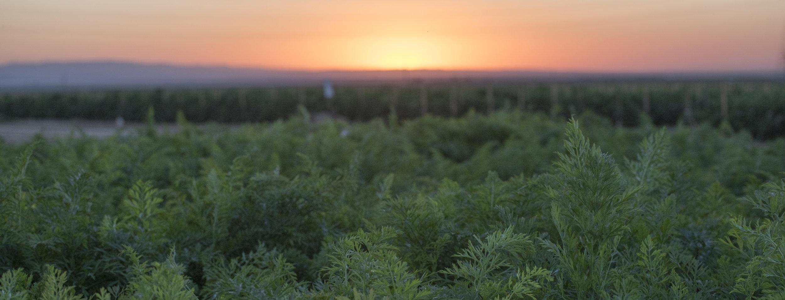 Bolthouse_Sunset-6590.jpg