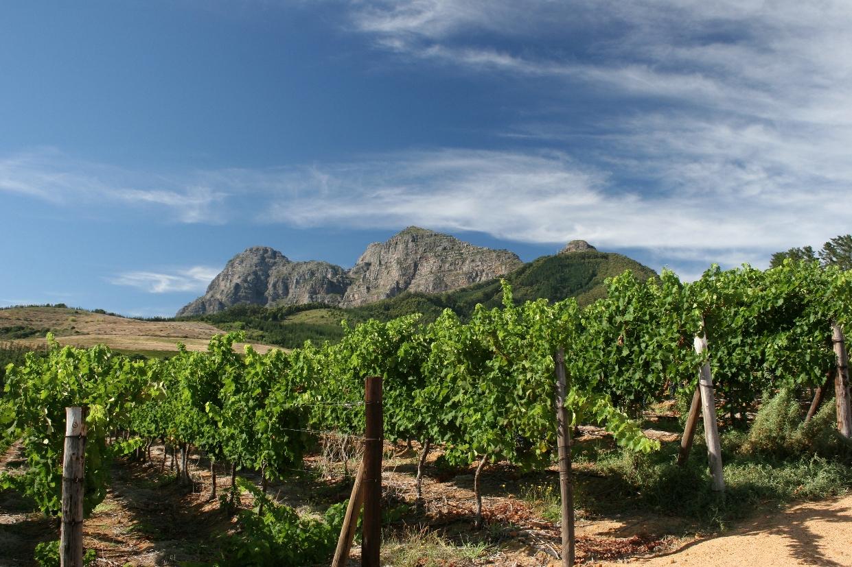 Vineyards of Backsberg Cellars with Simonsberg Mountain vistas. Image courtesy of Backsberg Cellars