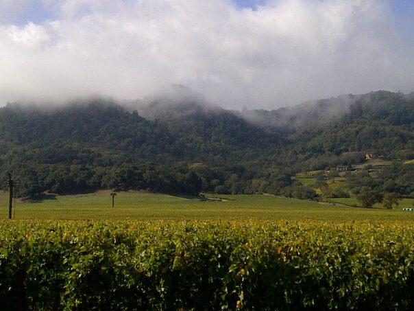 hill family vineyards.jpg