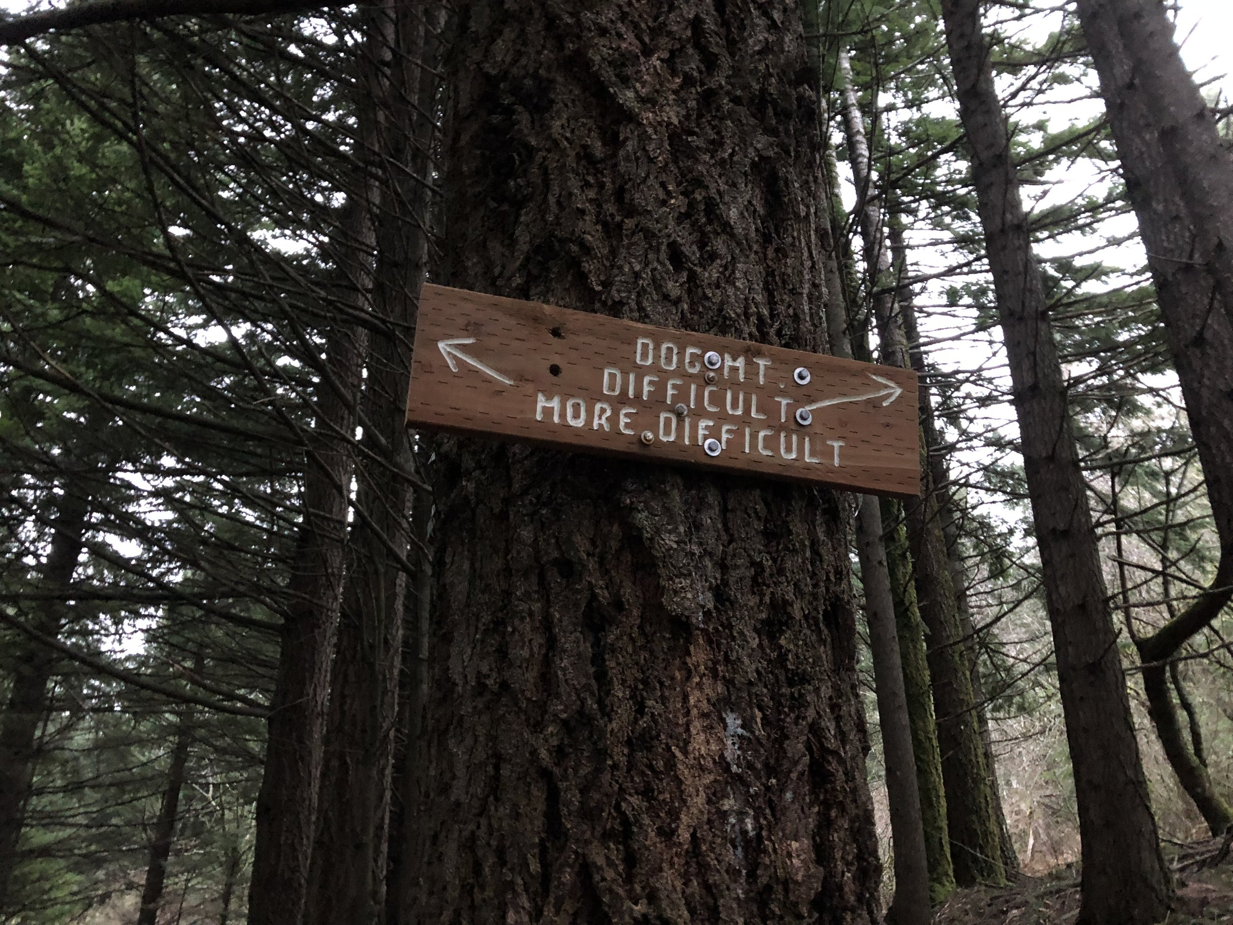 "Trail option between ""difficult"" and ""more difficult."""