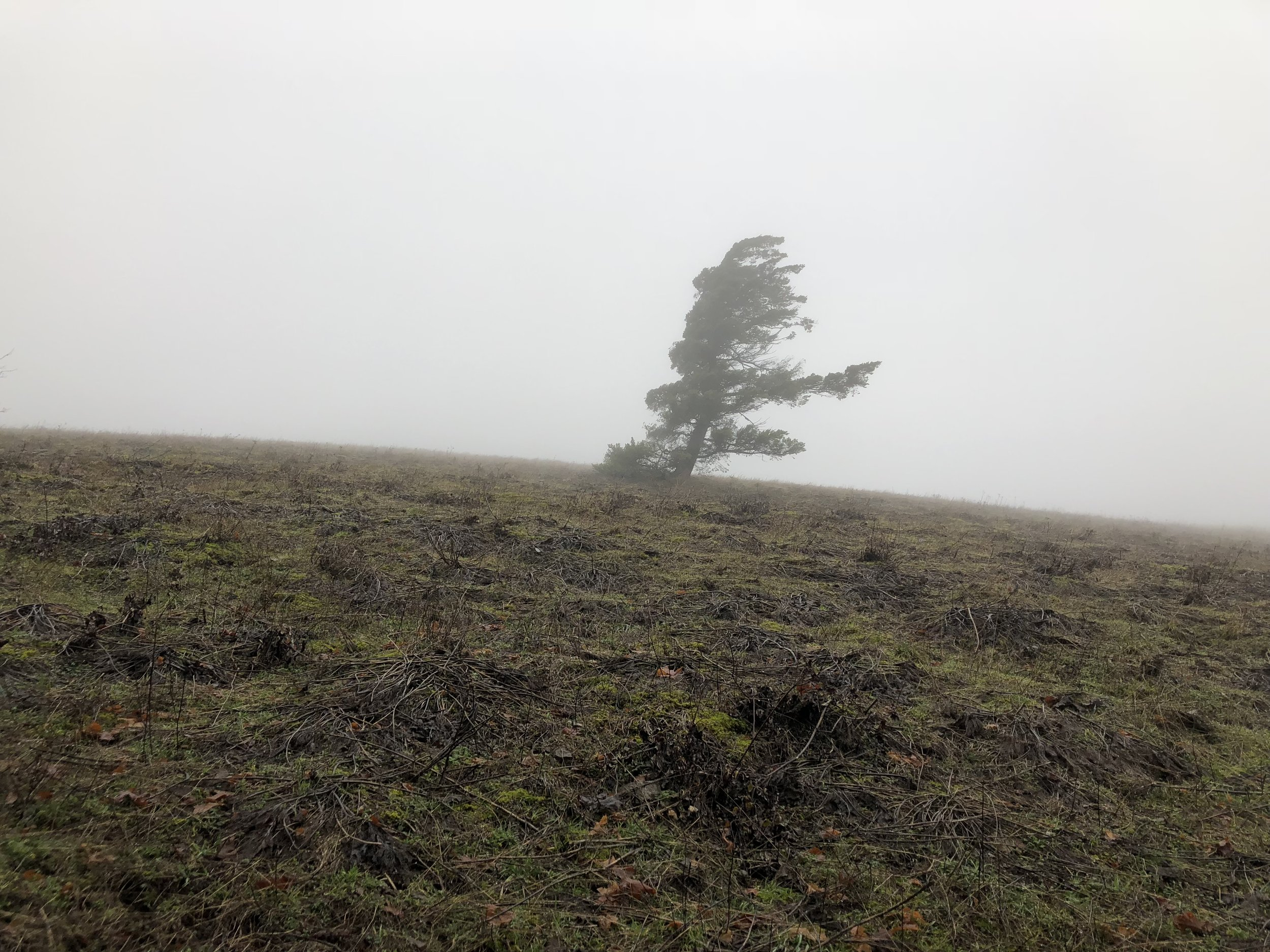 The lonely tree below the summit.
