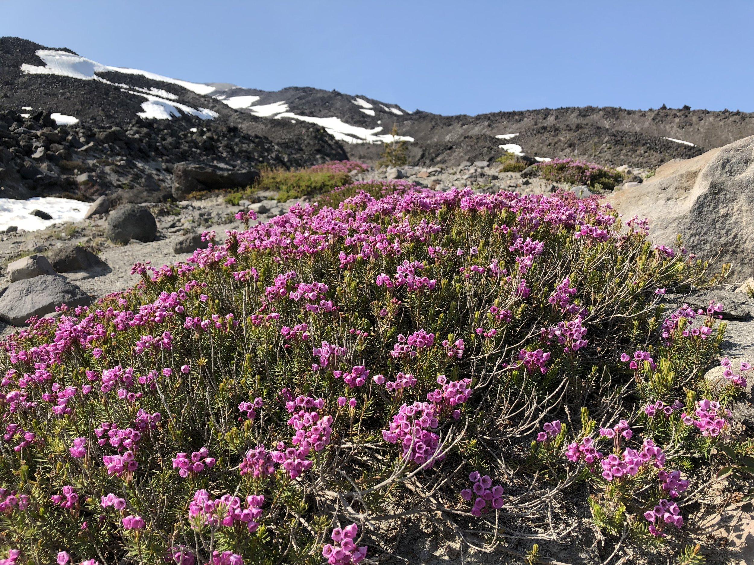 Wildflowers near the treeline looking up the mountain.