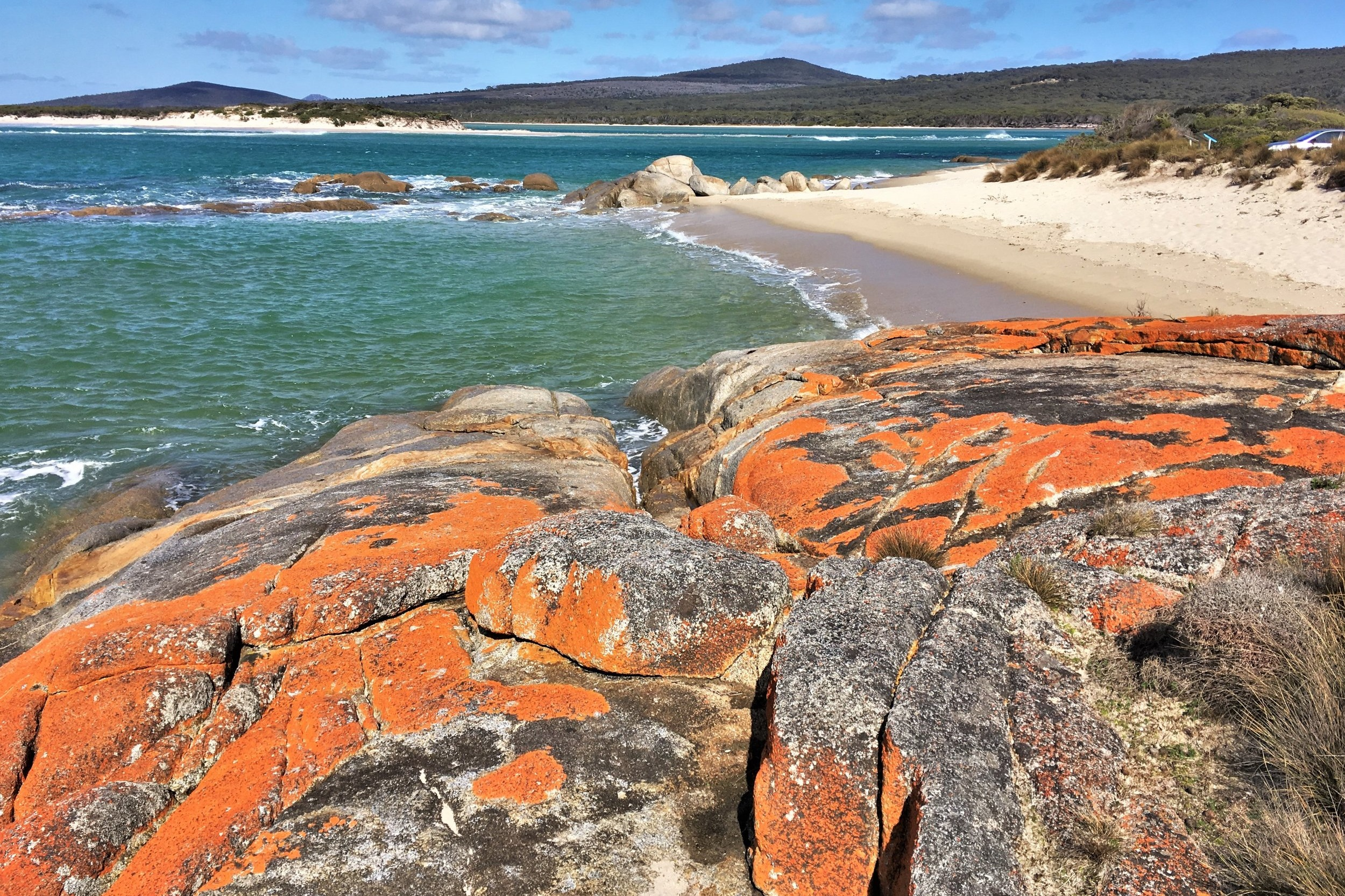 Beach+and+red+boulders+%28colored+by+algae%29+along+the+coast+on+Flinders+Island%2C+Tasmania