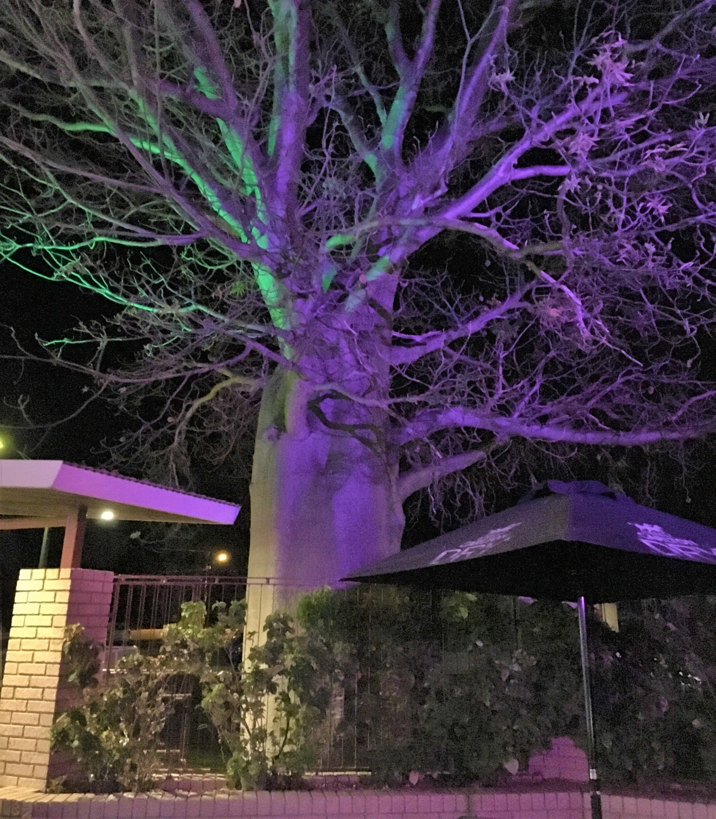 Night-lit baobab outside a restaurant in Kununurra.