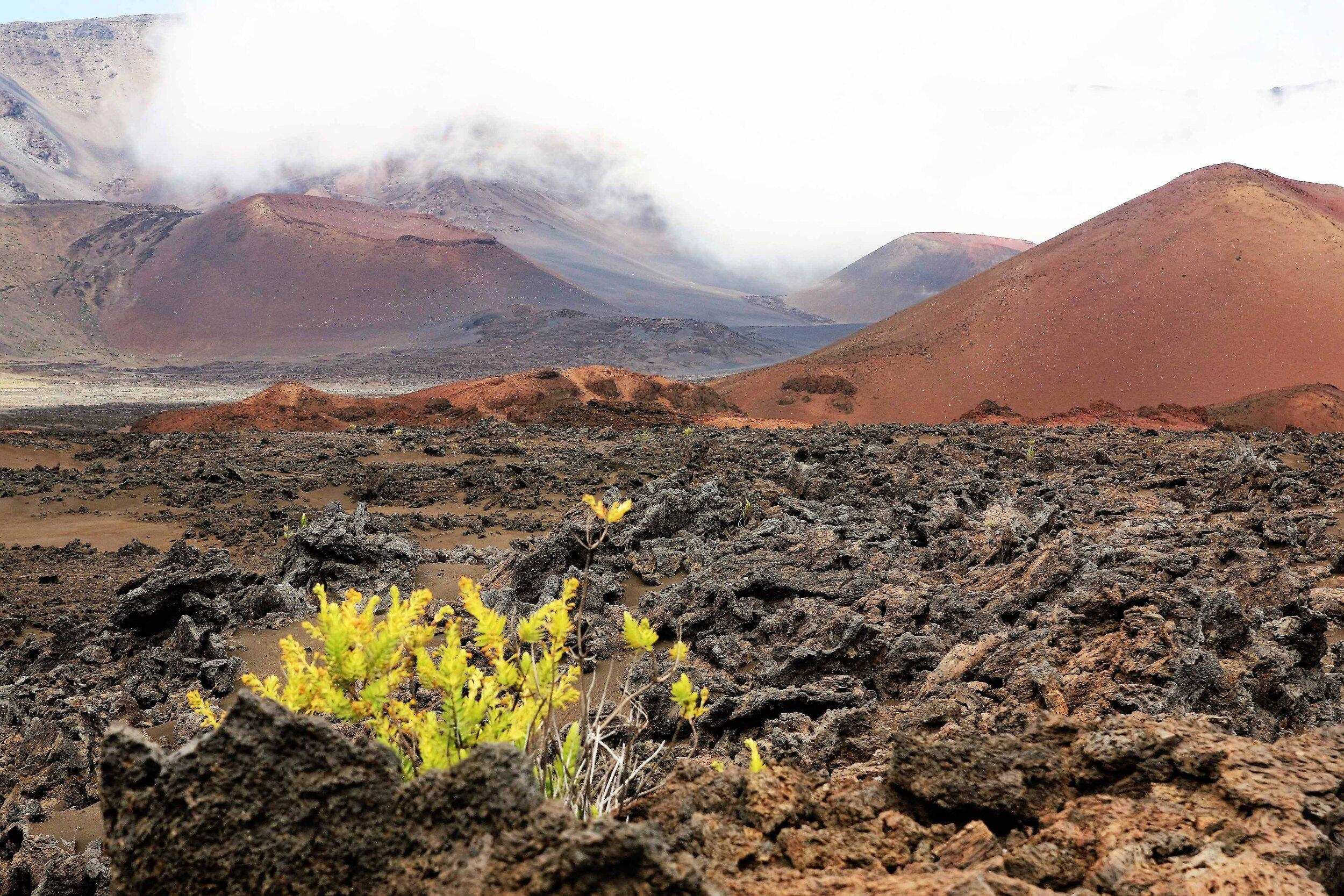 Harsh but delicate volcanic alpine landscape of Haleakala Crater, Maui.