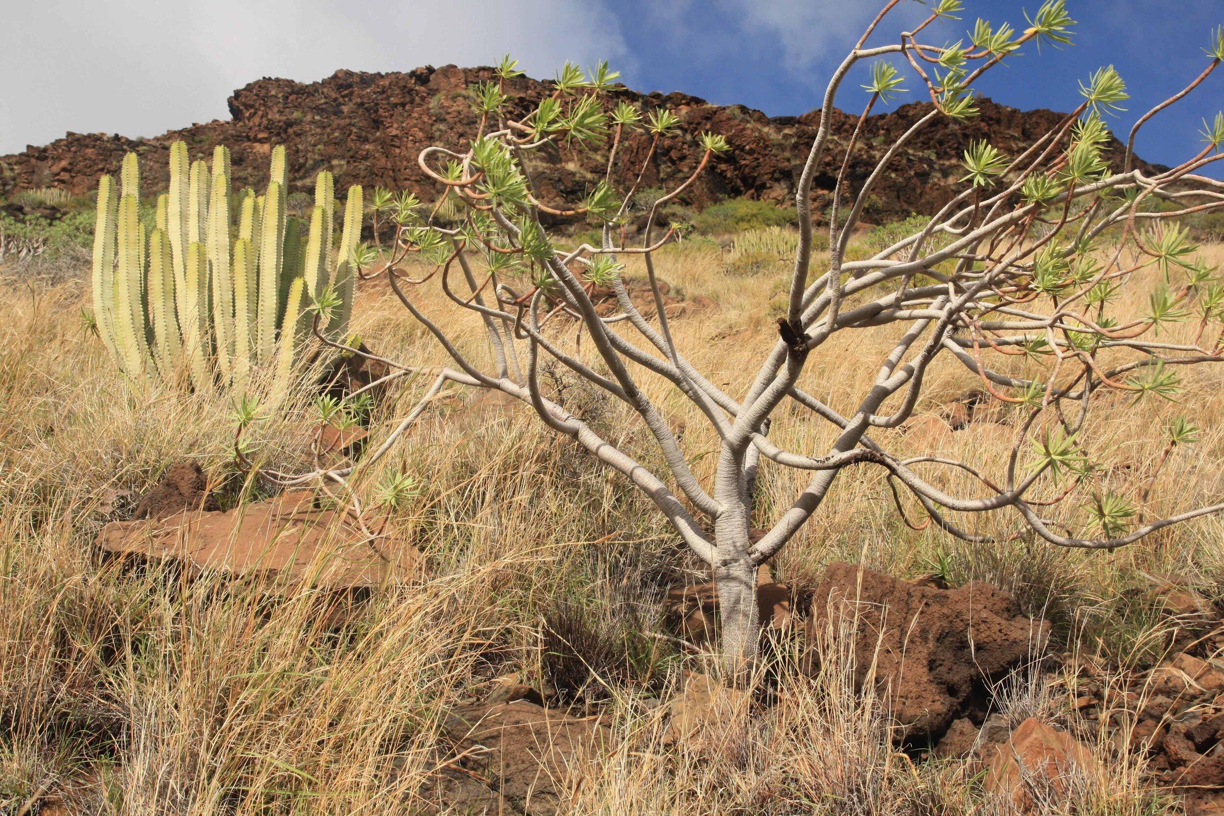Semiarid coastline of La Gomera, Canary Islands.