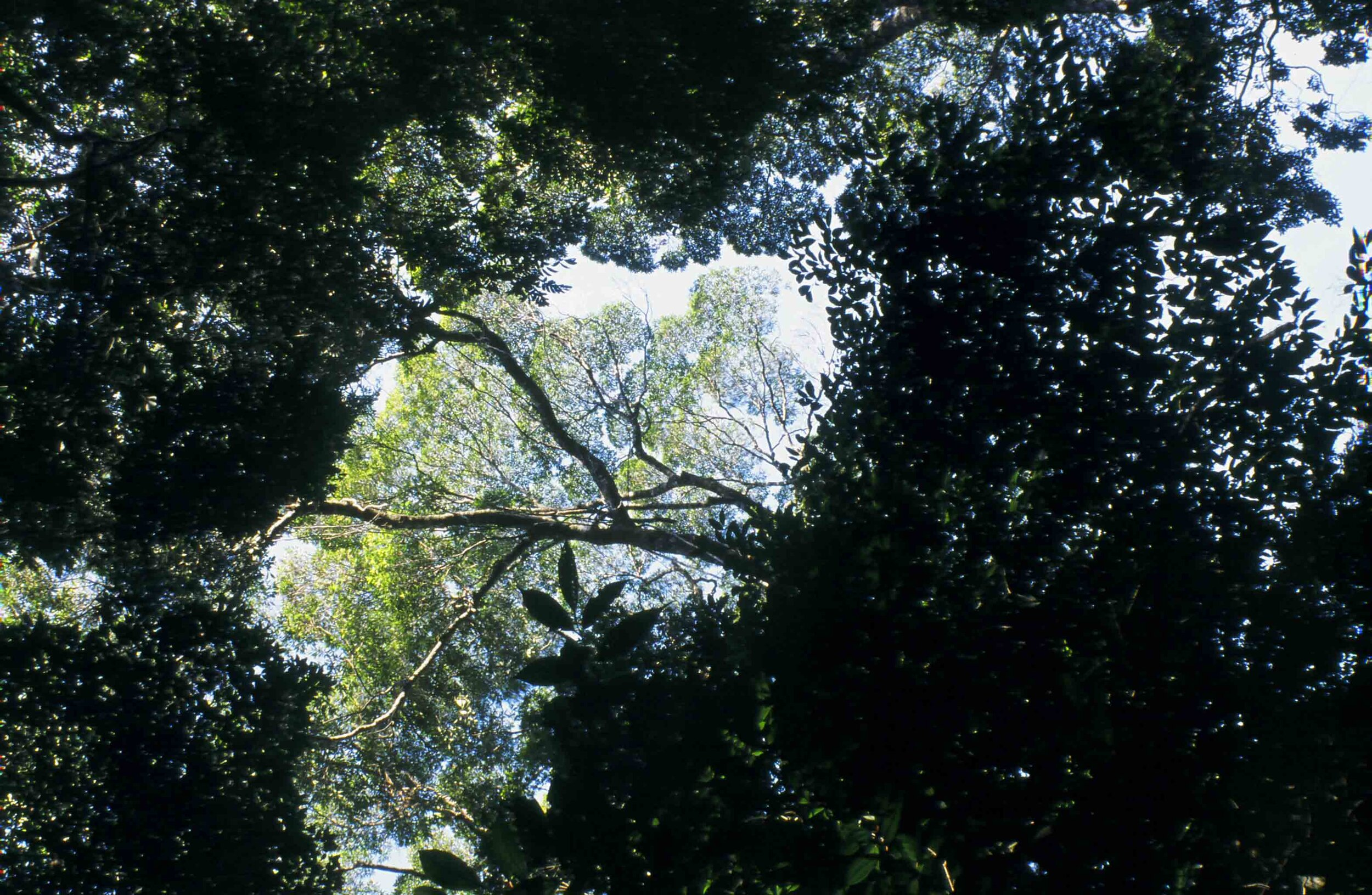 """Rainforest of Tijuca National Park, Rio de Janeiro. Protected and experienced as a """"wilderness"""" area despite having been re-planted 150 years ago and today facing numerous pressures from the surrounding city."""