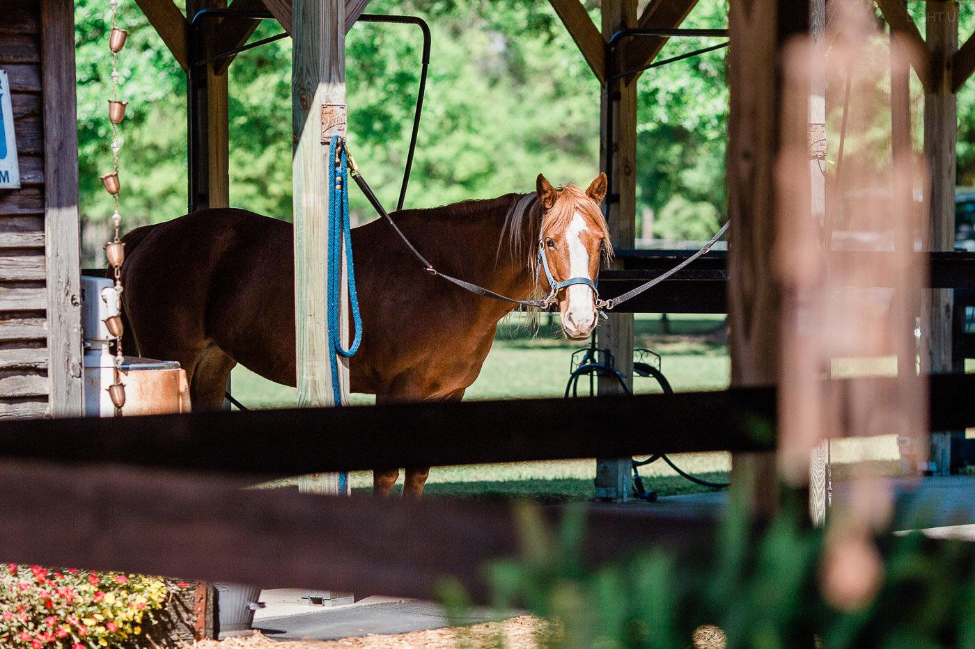 Lakeland-barn-wedding-at-white-horse-ranch-2.jpg