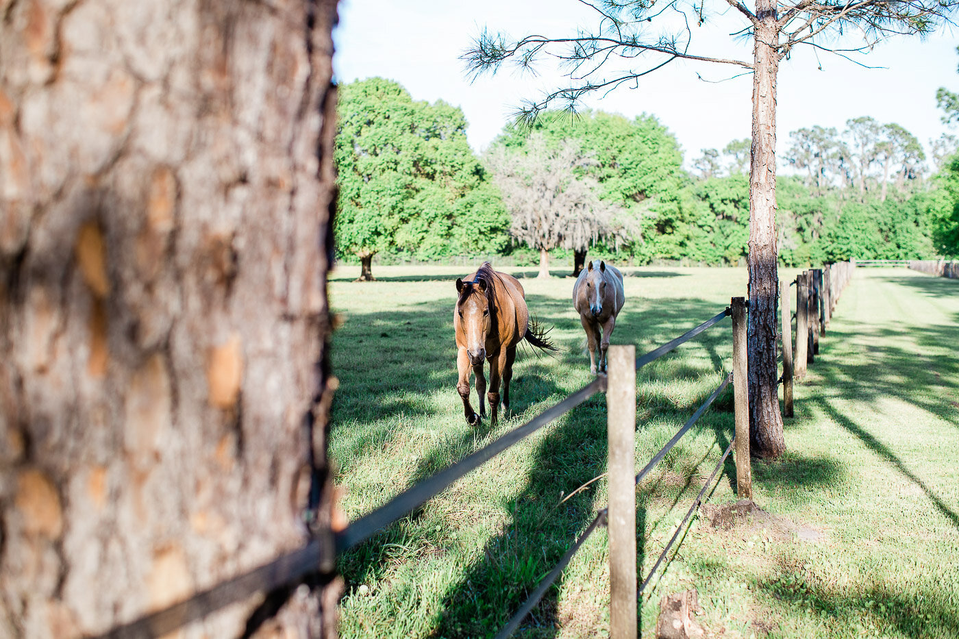 Lakeland-barn-wedding-at-white-horse-ranch-62.jpg
