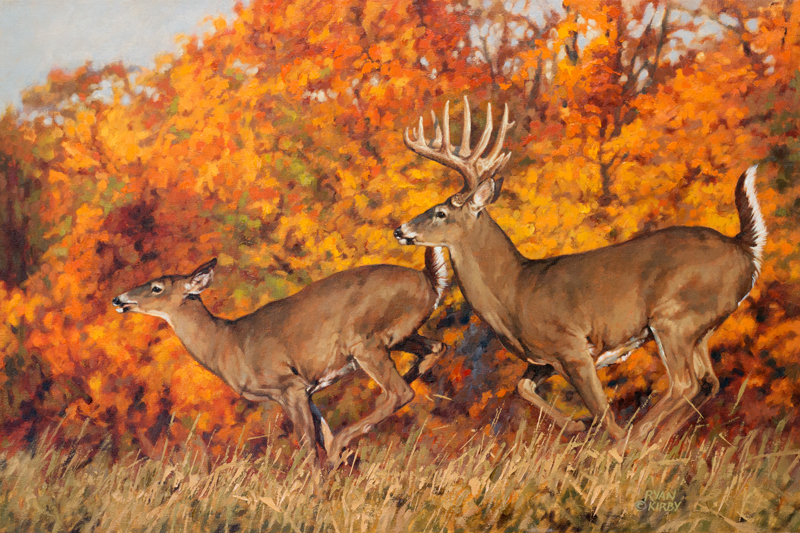 ryan_kirby_original_whitetail_deer_painting_rolling_right_along