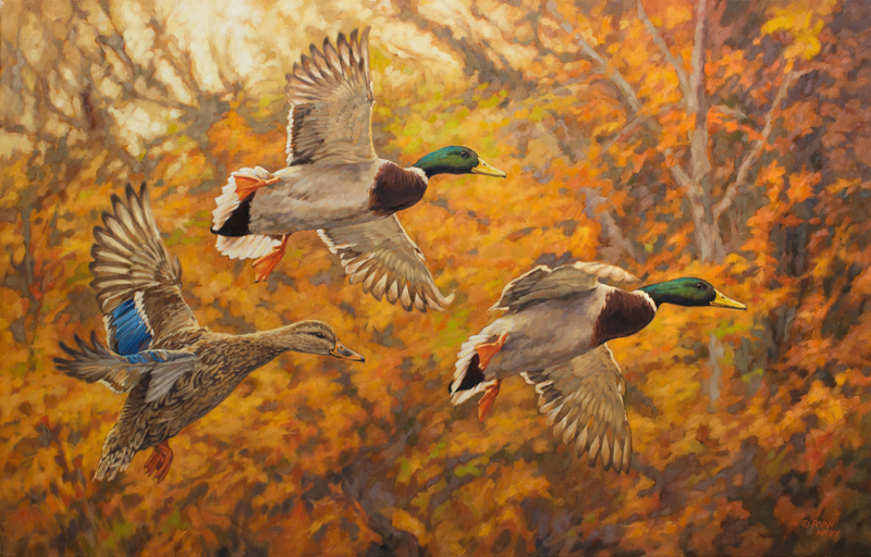 ryan_kirby_original_mallard_painting_fall_break
