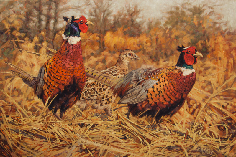 ryan_kirby_original_pheasant_painting_ringneck_refuge