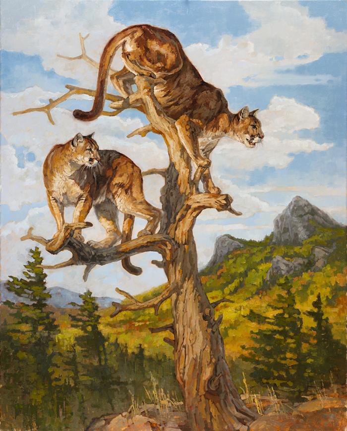 ryan_kirby_original_grandfather_mountain_cougar_painting