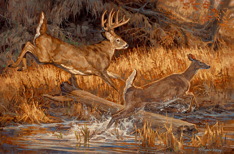 Copyright-Ryan-Kirby-Whitetail-Deer-Oil-Painting-River-Runners-30x20.jpg