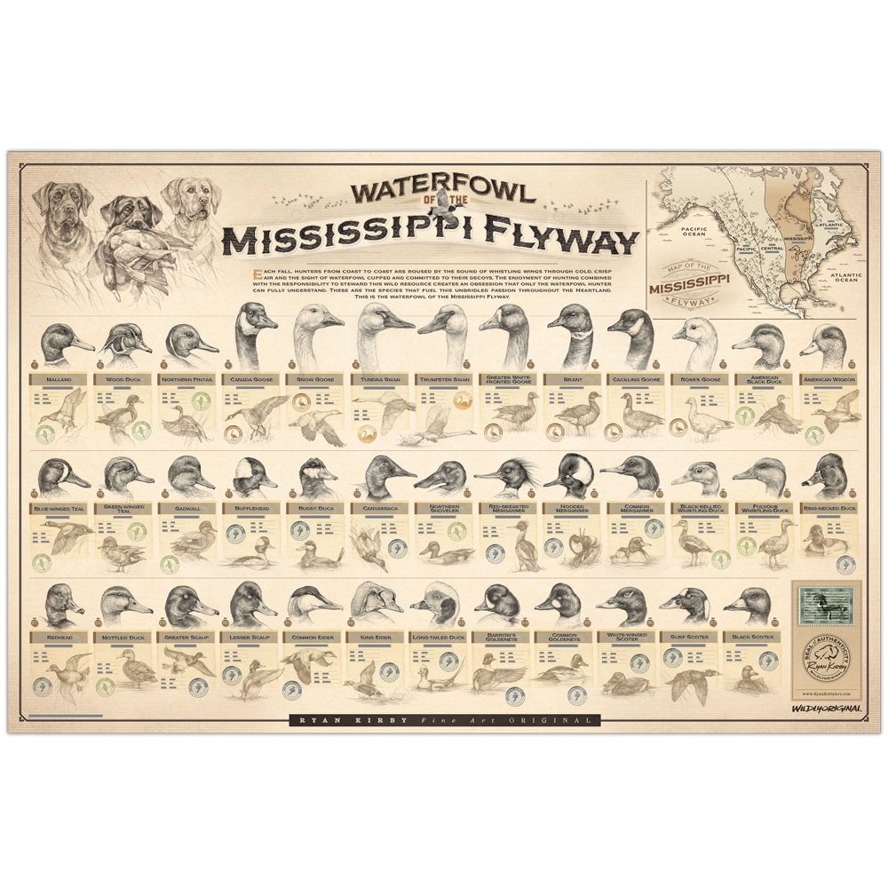 Ryan-Kirby-Waterfowl-Mississippi-Flyway-Poster-Duck-Identification-Chart-Sketches copy.png