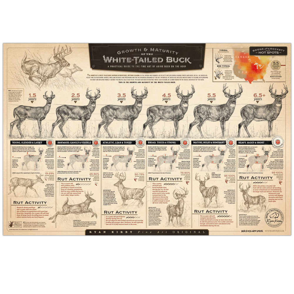 Ryan-Kirby-Growth-Maturity-Whitetail-Buck-Poster-Deer-Aging-Chart-Sketches-QDMA copy.png